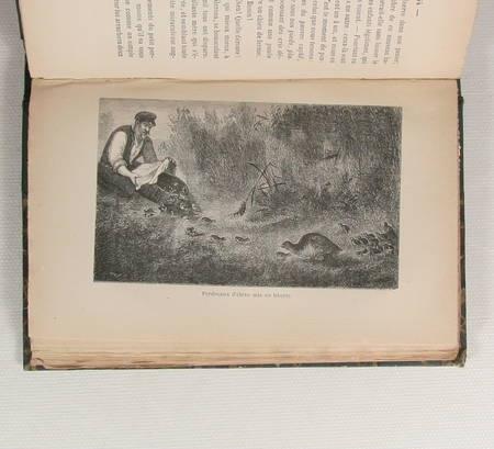 Bellecroix - La chasse pratique - 1884 - Relié - Illustrations - Photo 2 - livre d'occasion
