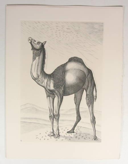 APOLLINAIRE - Le bestiaire du cortège d'Orphée - 1966 - Burins de Tavy Notton - Photo 5 - livre moderne