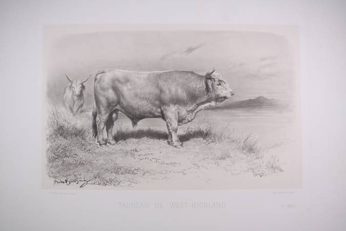 Taureau de West-Highland - Riffaut, Rosa Bonheur et Nadar jeune - 1862 - Photo 0 - gravure