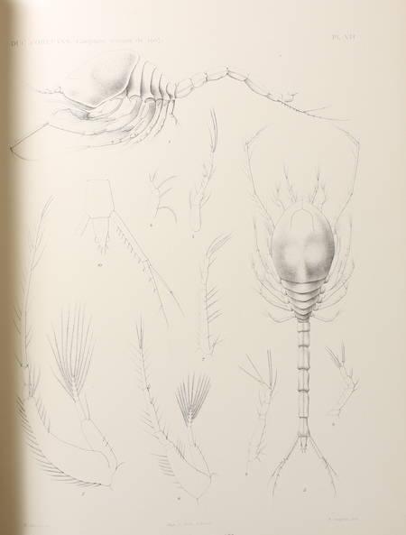 STAPPERS (Dr. Louis) et ORLEANS (Duc d'). Crustacés malacostracés. Campagne arctique de 1907, livre rare du XXe siècle