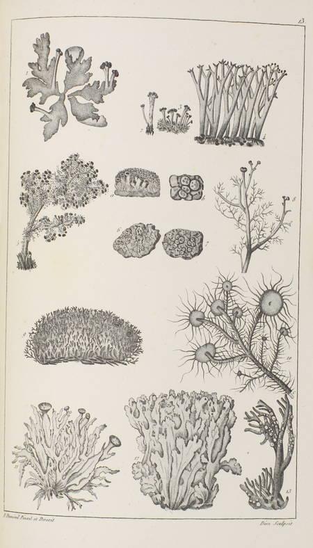 CHEVALLIER - Flore générale des environs de Paris - 1826 - 3 volumes - Photo 1 - livre rare