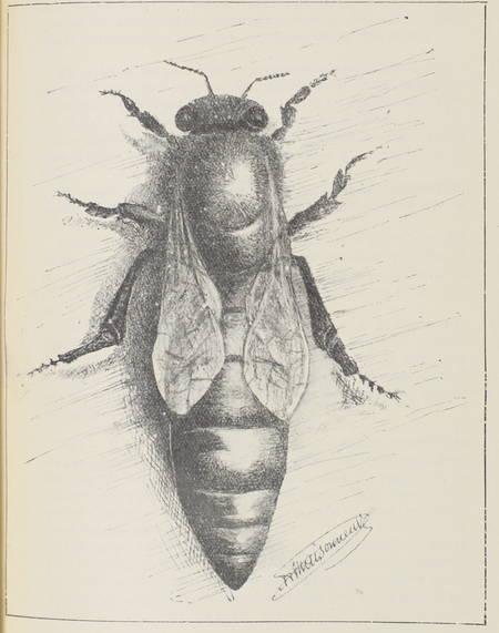 PERRET-MAISONNEUVE (A.). L'apiculture intensive et l'élevage des reines