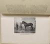 DAMAS d ANLEZY - En Nivernais - Saint-Benin-d Azy - (1910) - Photo 0, livre rare du XXe siècle