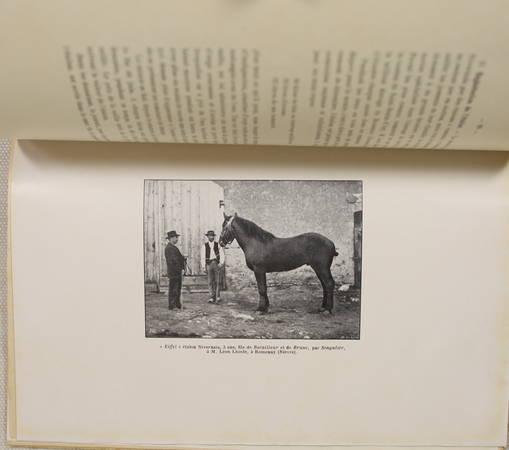 DAMAS d'ANLEZY (Maxence de). En Nivernais. Etude de la production animale dans le canton de Saint-Benin-d'Azy, livre rare du XXe siècle