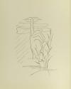 AREVALO MACRY - Canciones 1972 - Illustré par Guillermo Garcia-Sauco - Photo 0, livre rare du XXe siècle