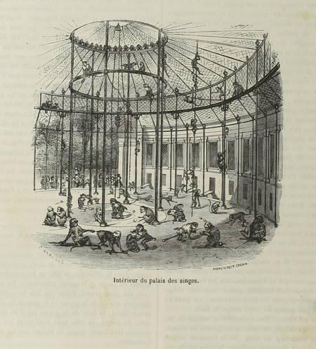 BOITARD - Le jardin des plantes - Mammifères - Barba (1851) - Gravures - Photo 0, livre rare du XIXe siècle