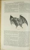 BOITARD - Le jardin des plantes - Mammifères - Barba (1851) - Gravures - Photo 6, livre rare du XIXe siècle