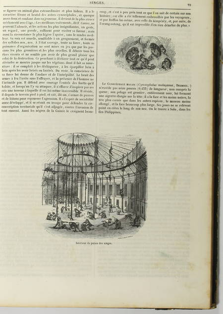 BOITARD - Le jardin des plantes - Mammifères - Barba (1851) - Gravures - Photo 7, livre rare du XIXe siècle