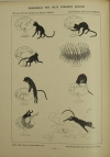 PESEUX-RICHARD (H.) et NEUMANN (J.-E.). Cent histoires sans paroles pour la conversation et la rédaction en toutes langues