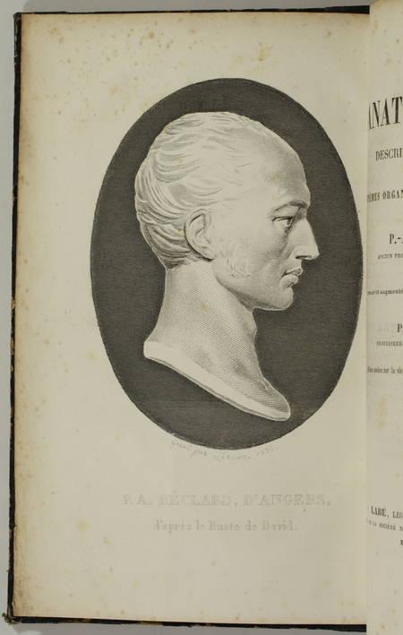P.-A. BECLARD, d Angers - Eléments d anatomie générale - 1852 - Photo 1, livre rare du XIXe siècle
