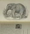 Le petit Buffon illustré - Histoire et description des animaux - 1869 - Gravures - Photo 2 - livre d occasion