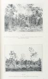 LABROY - Culture et exploitation du caoutchouc au Brésil - Rapport - 1913 - Photo 1, livre rare du XXe siècle