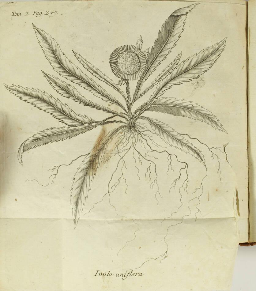 [Botanique] GILIBERT Histoire des plantes d Europe 1798 - 2 vols - 810 figures.. - Photo 4, livre ancien du XVIIIe siècle