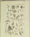 [Botanique] GILIBERT Histoire des plantes d Europe 1798 - 2 vols - 810 figures.. - Photo 6, livre ancien du XVIIIe siècle