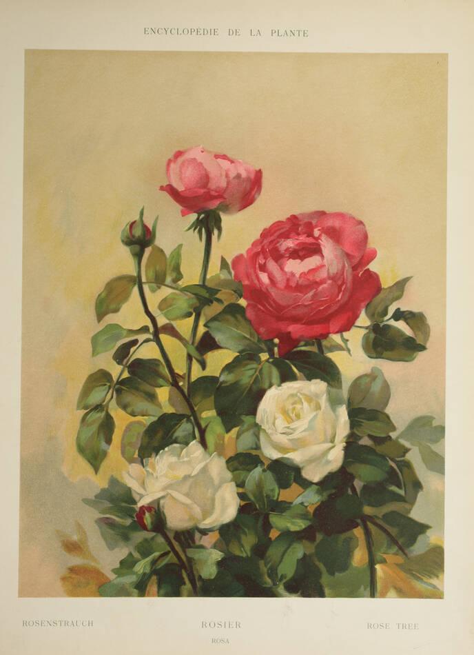 Encyclopédie artistique de la plante - 1904 - 384 planches - Mucha Meheut ... - Photo 9, livre rare du XXe siècle