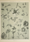 Encyclopédie artistique de la plante - 1904 - 384 planches - Mucha Meheut ... - Photo 10, livre rare du XXe siècle