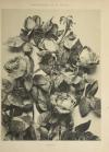Encyclopédie artistique de la plante - 1904 - 384 planches - Mucha Meheut ... - Photo 11, livre rare du XXe siècle