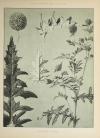 Encyclopédie artistique de la plante - 1904 - 384 planches - Mucha Meheut ... - Photo 12, livre rare du XXe siècle