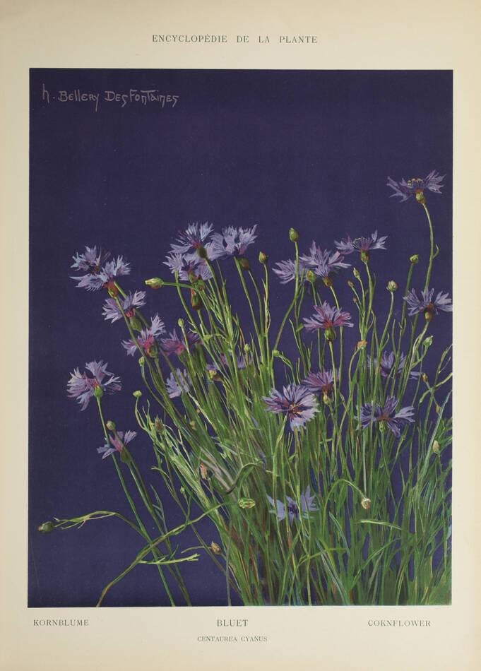 Encyclopédie artistique de la plante - 1904 - 384 planches - Mucha Meheut ... - Photo 1, livre rare du XXe siècle