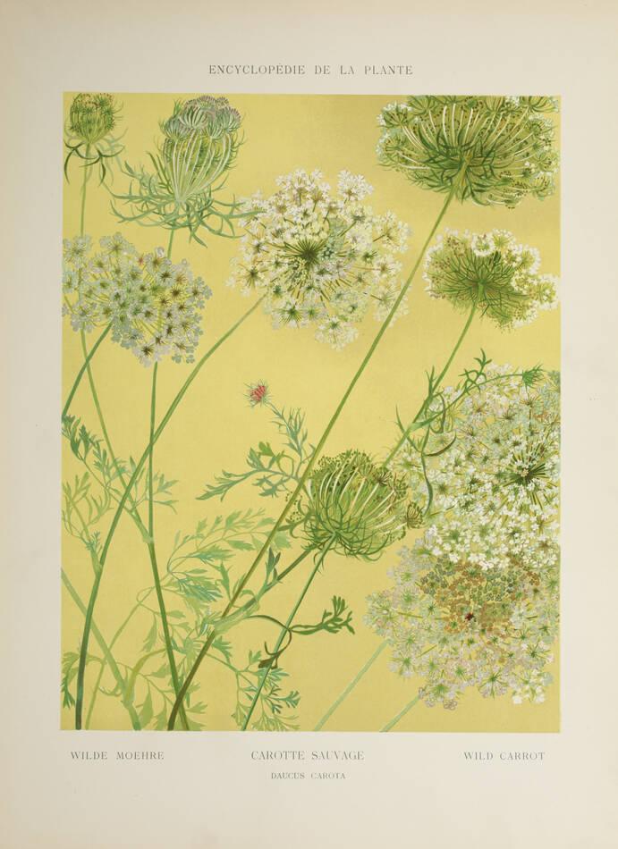 Encyclopédie artistique de la plante - 1904 - 384 planches - Mucha Meheut ... - Photo 4, livre rare du XXe siècle