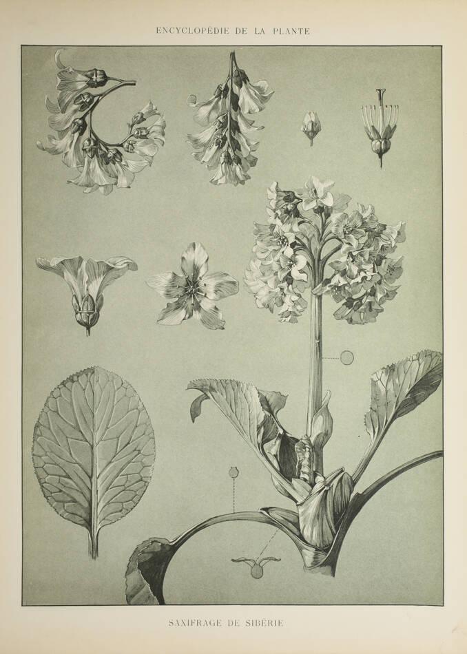 Encyclopédie artistique de la plante - 1904 - 384 planches - Mucha Meheut ... - Photo 6, livre rare du XXe siècle