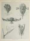Encyclopédie artistique de la plante - 1904 - 384 planches - Mucha Meheut ... - Photo 7, livre rare du XXe siècle