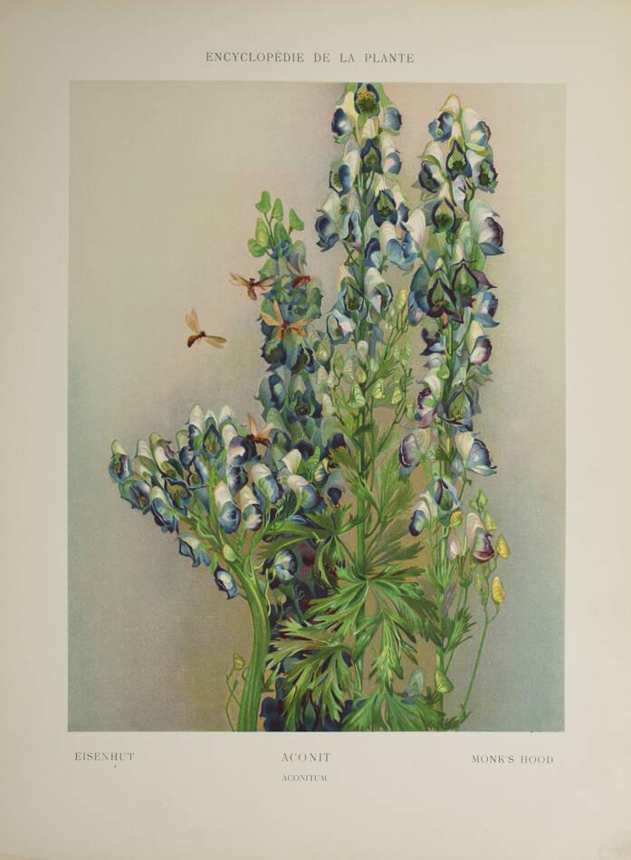 Encyclopédie artistique de la plante - 1904 - 384 planches - Mucha Meheut ... - Photo 8, livre rare du XXe siècle