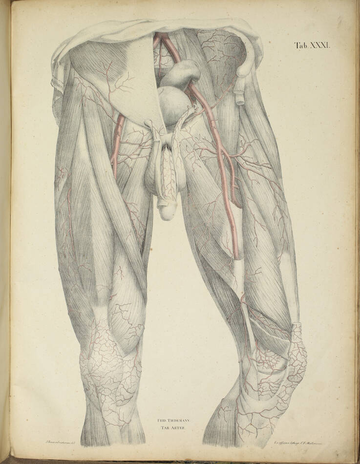 TIEDEMANN - Tabulae arteriarum - 1822 - In plano - Planches - Lithographies - Photo 10, livre rare du XIXe siècle