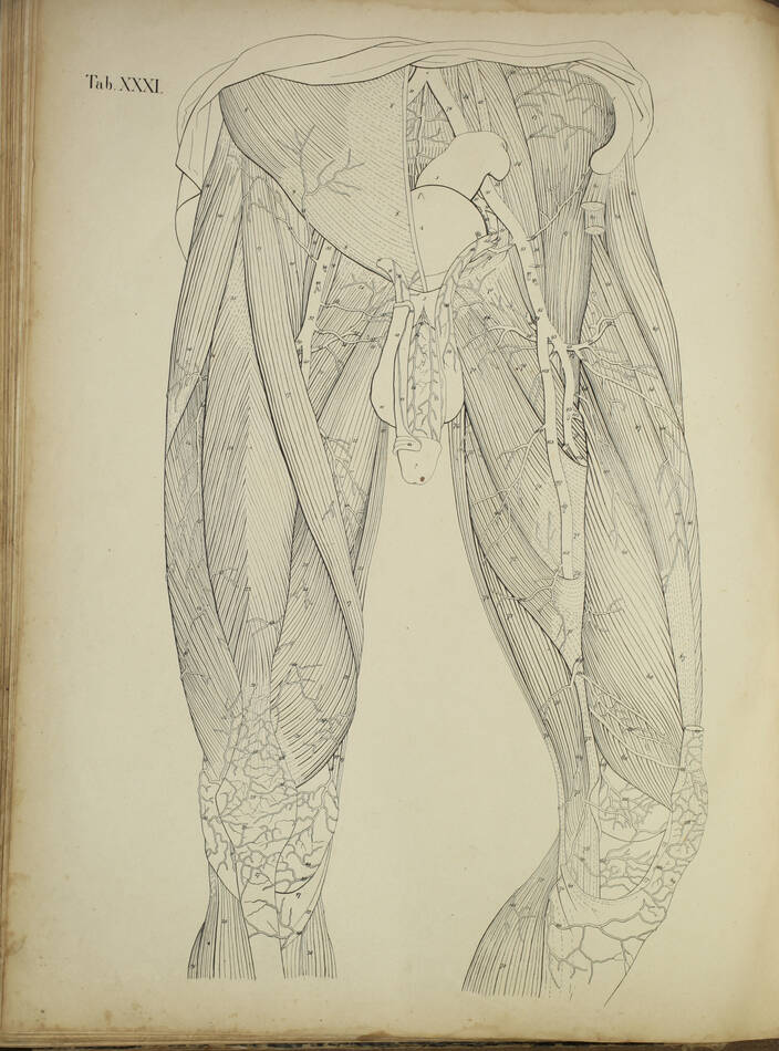 TIEDEMANN - Tabulae arteriarum - 1822 - In plano - Planches - Lithographies - Photo 11, livre rare du XIXe siècle