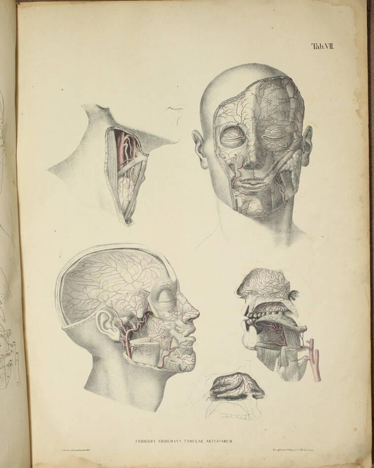 TIEDEMANN - Tabulae arteriarum - 1822 - In plano - Planches - Lithographies - Photo 13, livre rare du XIXe siècle