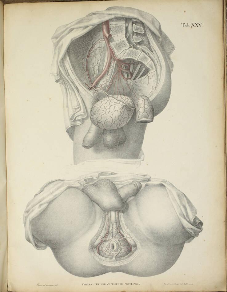 TIEDEMANN - Tabulae arteriarum - 1822 - In plano - Planches - Lithographies - Photo 15, livre rare du XIXe siècle