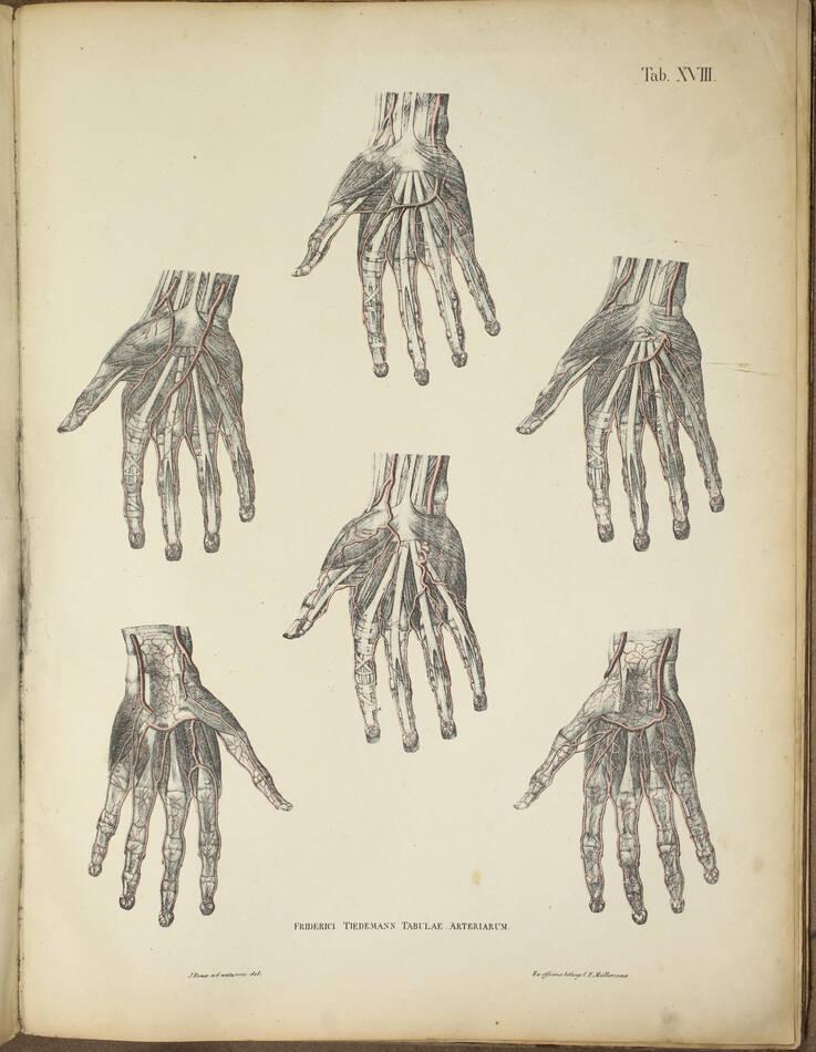 TIEDEMANN - Tabulae arteriarum - 1822 - In plano - Planches - Lithographies - Photo 4, livre rare du XIXe siècle