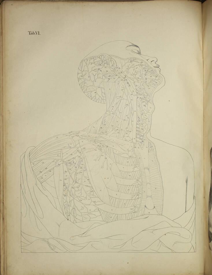 TIEDEMANN - Tabulae arteriarum - 1822 - In plano - Planches - Lithographies - Photo 7, livre rare du XIXe siècle