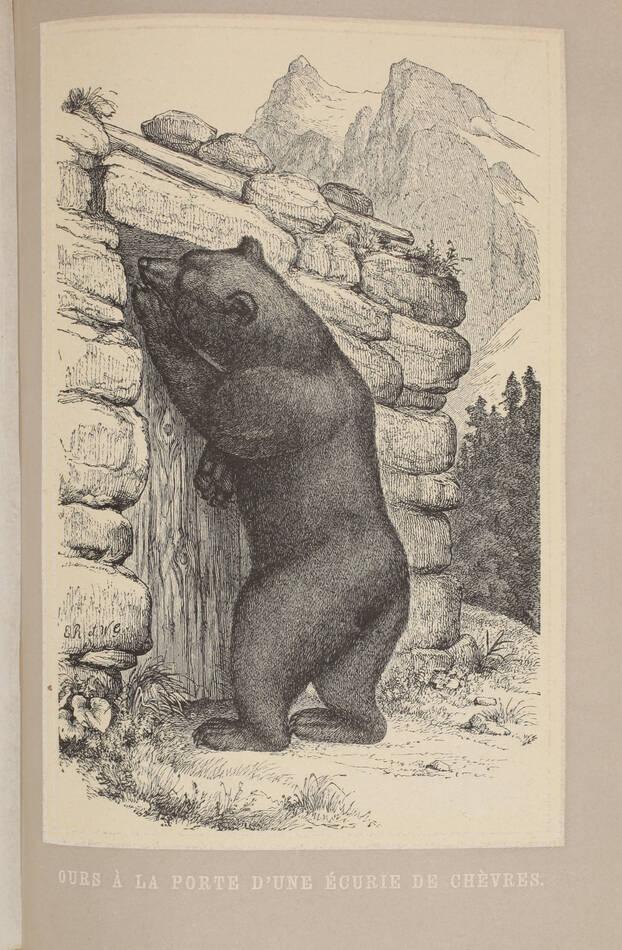 TSCHUDI - Le monde des Alpes - Description pittoresque -1870 - Gravures - Photo 0, livre rare du XIXe siècle