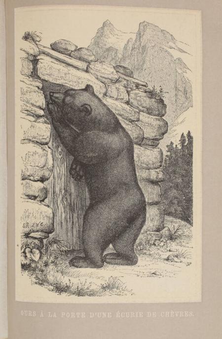 TSCHUDI (Friedrich von). Le monde des Alpes. Description pittoresque des montagnes de la Suisse et particulièrement des animaux qui les peuplent, livre rare du XIXe siècle